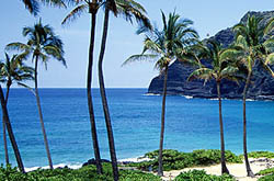 Hawaii - Beach, Palm Trees